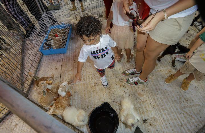 Asahd hits the petting zoo.