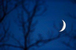 Moon Behind Trees At Night