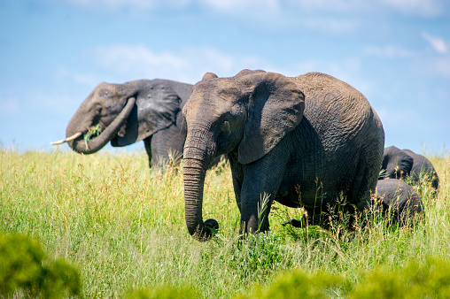 Elephant traffic