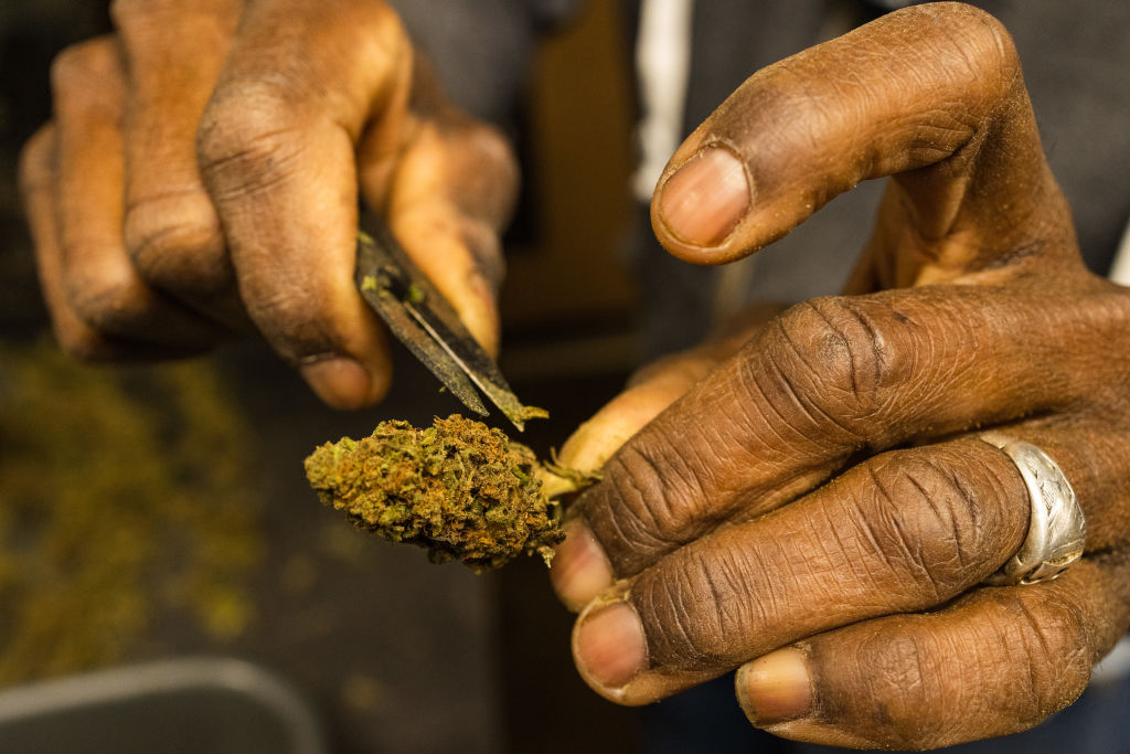 A Hemp Farm As New York Gets Closer To Legalizing Recreational Marijuana