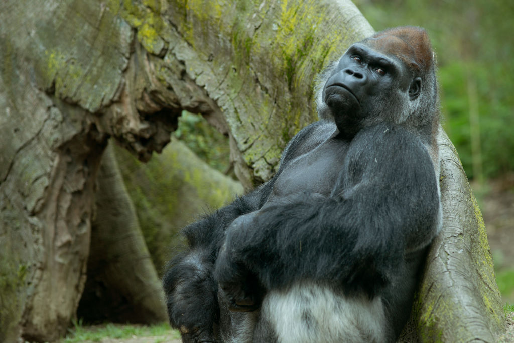 Animals a the Bronx Zoo